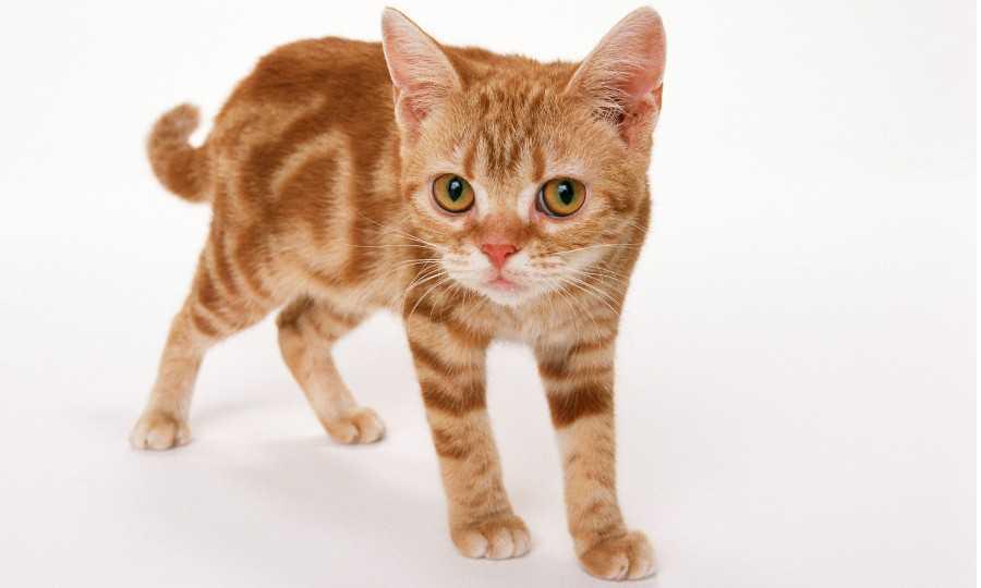 Internet aime son roi : le chat